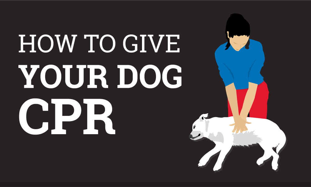 How To Do Cpr On A Dog Cpr Near Me
